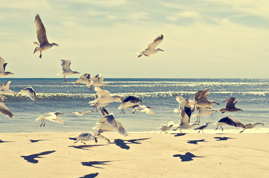 01-Ettible-NYC-Travel-Photography-Hamptons-Seagulls-01