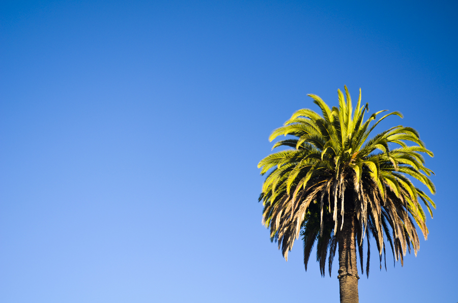 09-Ettible-NYC-Travel-Photography-California-Palm-09
