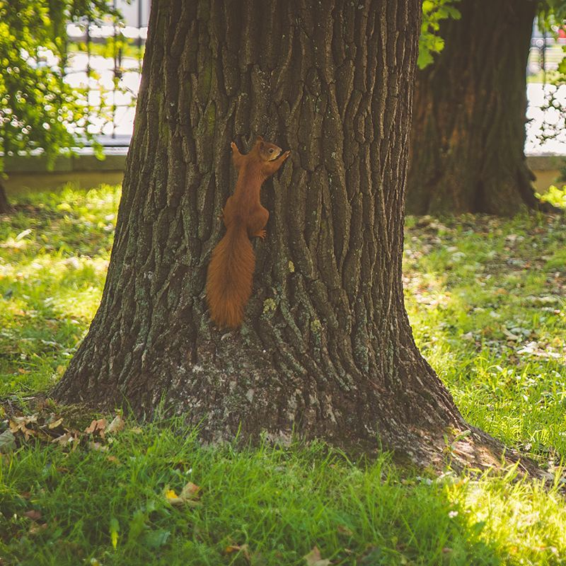 """One of Europe's red squirrels in Warsaw's Łazienki Park, which my boyfriend says is the Central Park of Warsaw. It was designed in the 17th century, and the name translates to """"baths park"""" because of the public baths that were here. But """"łazienki"""" also translates to """"bathrooms"""", so I enjoyed calling this Bathroom Park."""