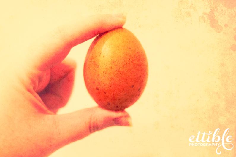 Speckled Brown Egg
