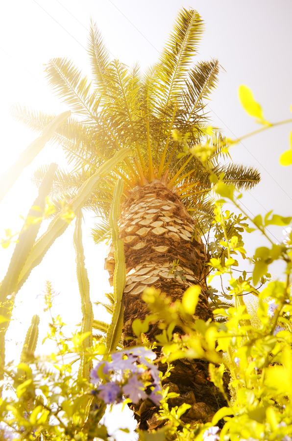 15-Ettible-NYC-Travel-Photography-Sunlit-California-Palm-15