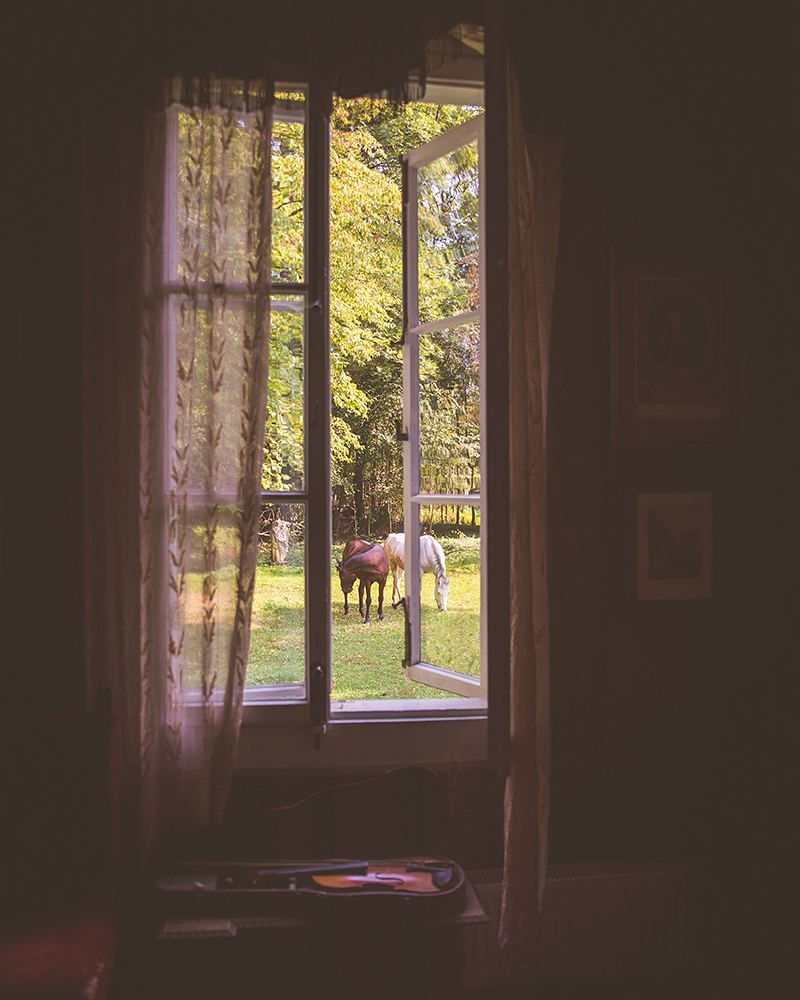 Horses through a window of a historic manor house outside of Warsaw, Poland.
