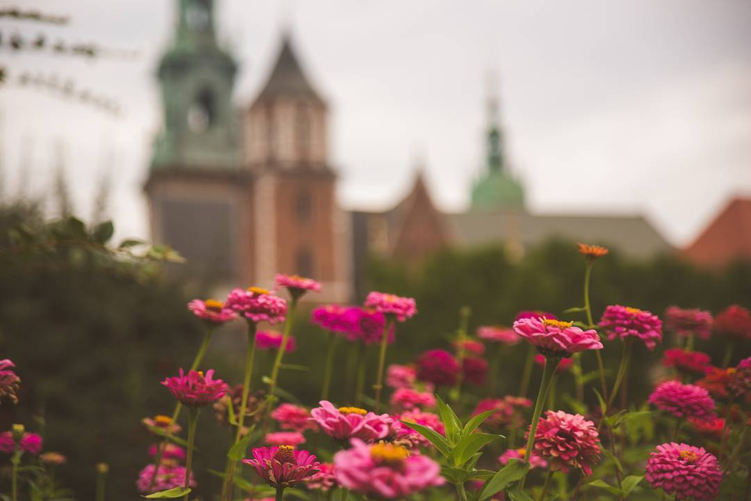 Trying to capture a picture of the bee that was flying around these flowers outside of Wawel Castle. And failing.